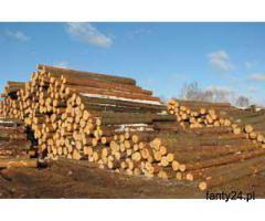 Trociny drzewne 4 zl/m3. Linie do produkcji europalet, desek, elementow. Hala produkcyjno magazynowa